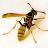 Hornet Sting Allergy