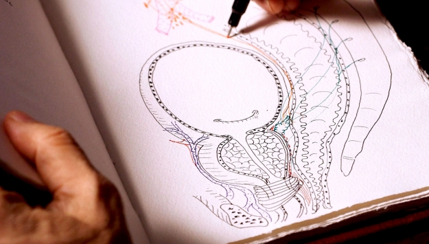 Illustration of The Prostate Gland