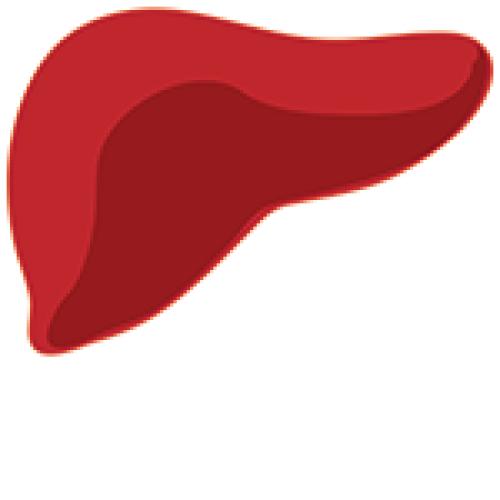 Fatty Liver Disease (Hepatic Steatosis)