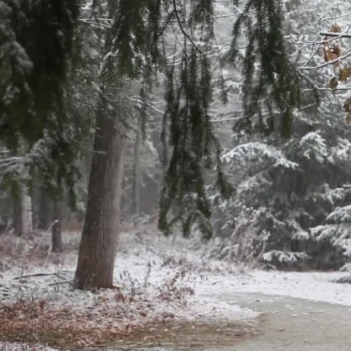 Monday Meditation Minute - Lenox Snowfall